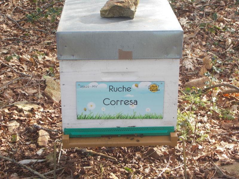 La ruche Corresa