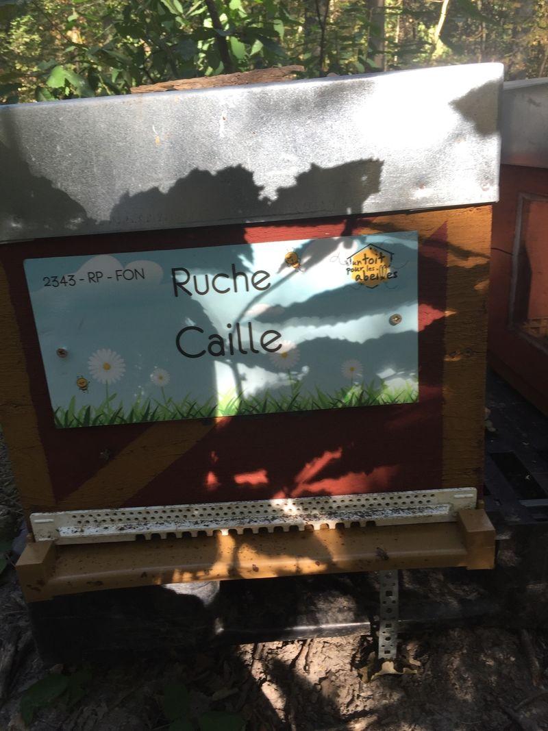 La ruche Caille