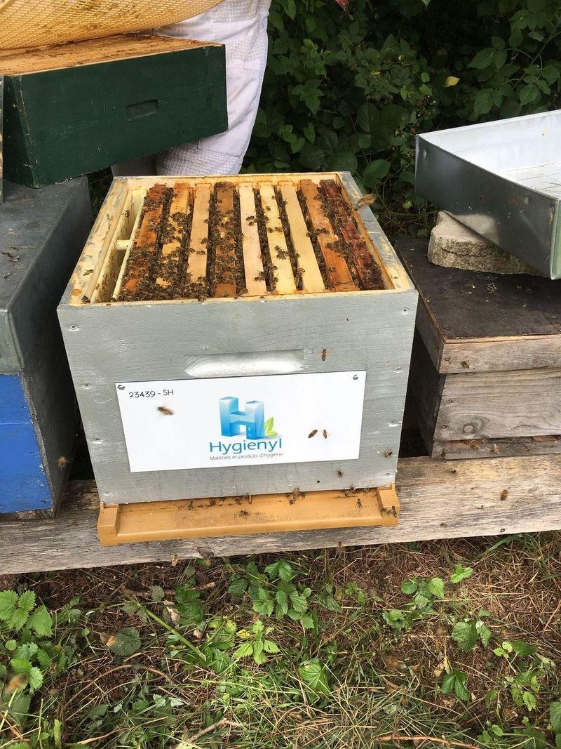 La ruche HYGIENYL