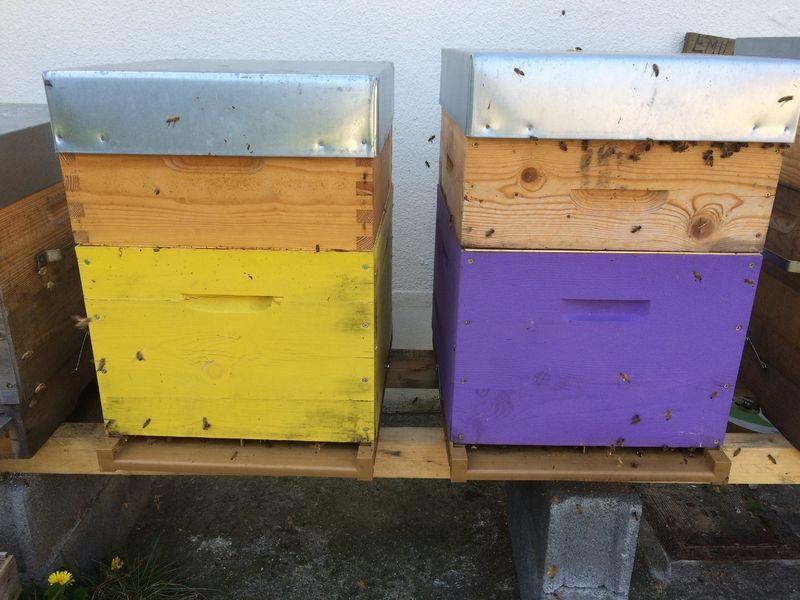 La ruche TOYOTA BOSHOKU SOMAIN