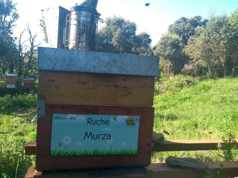 La ruche Murza