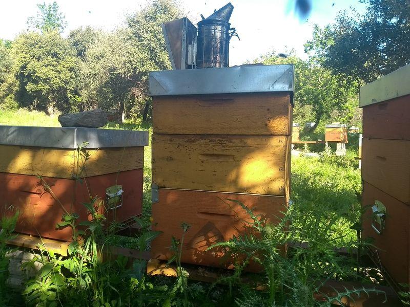 La ruche Pecita