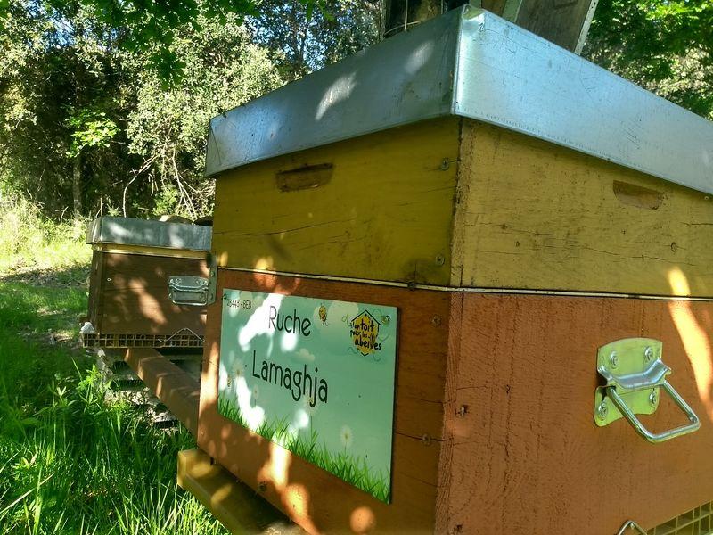 La ruche Lamaghja