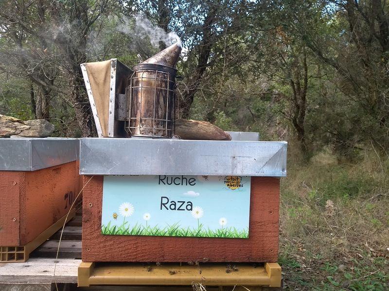 La ruche Raza