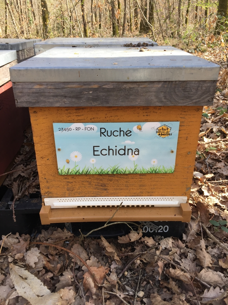 La ruche Echidna