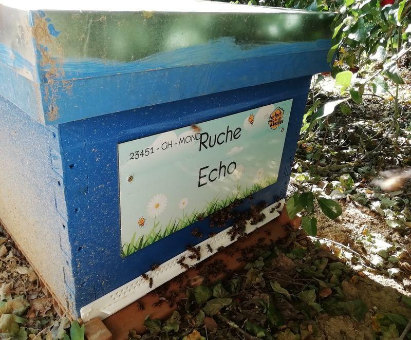 La ruche Echo