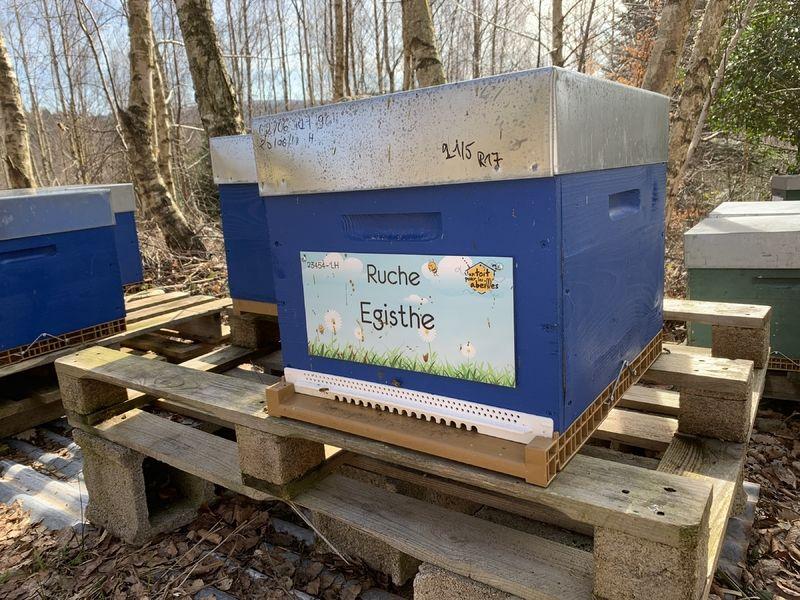 La ruche Egisthe
