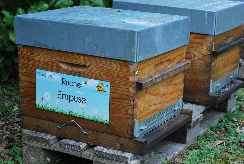 La ruche Empuse