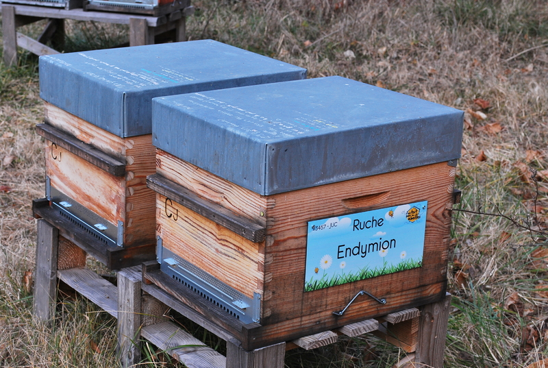 La ruche Endymion