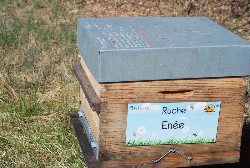 La ruche Enée