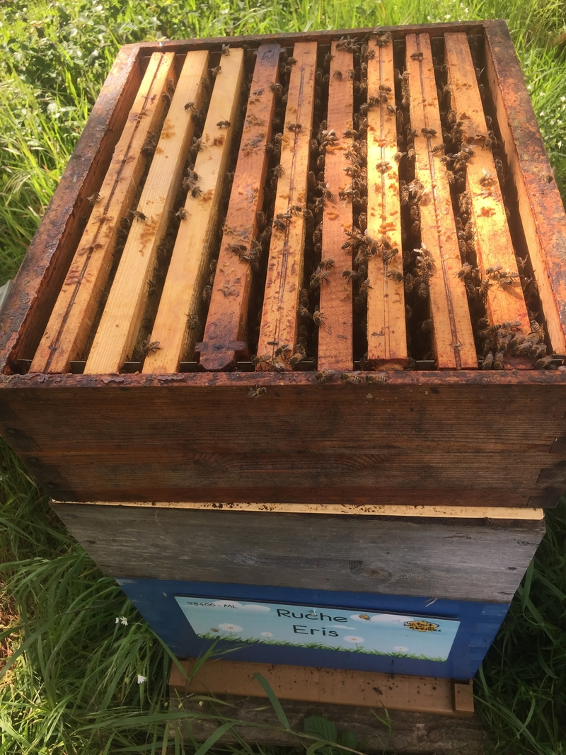 La ruche Eris