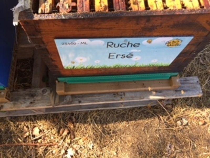 La ruche Ersé