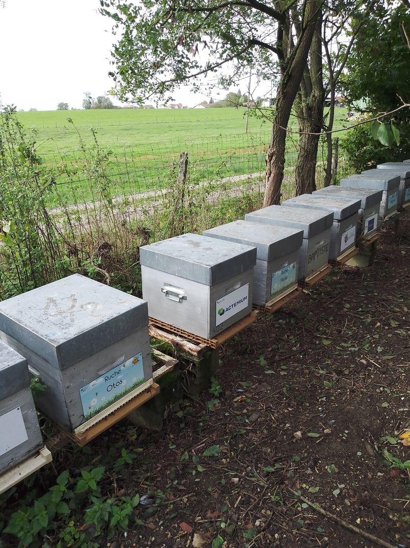 La ruche Elgie (actemium saône et loire)