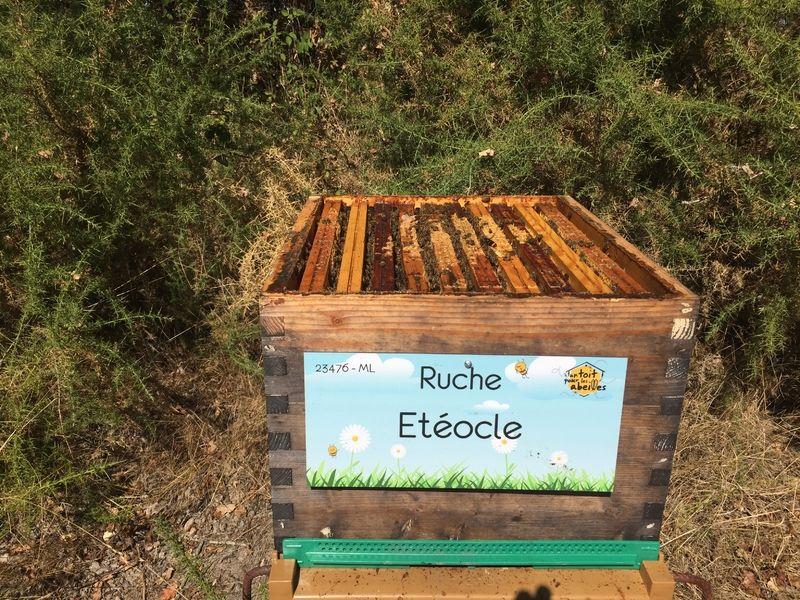 La ruche Etéocle