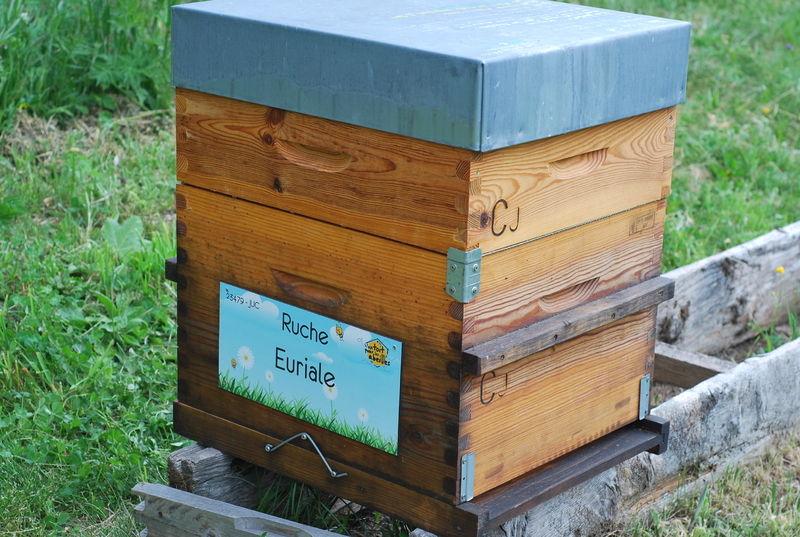La ruche Euriale