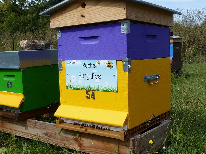 La ruche Eurydice