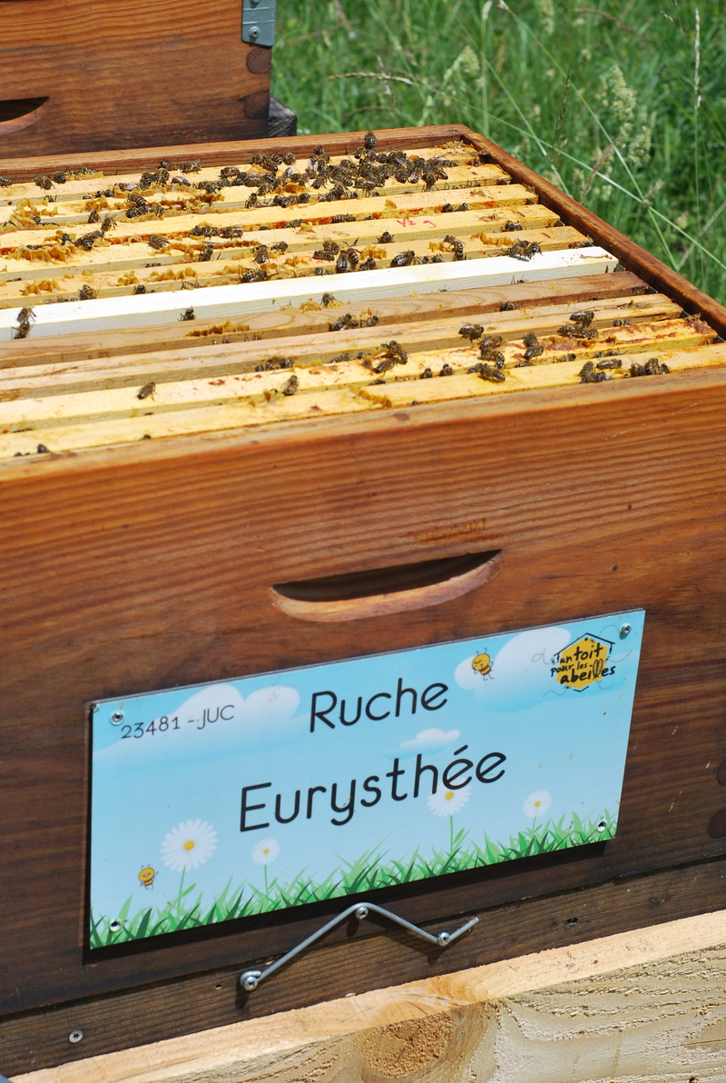 La ruche Eurysthée