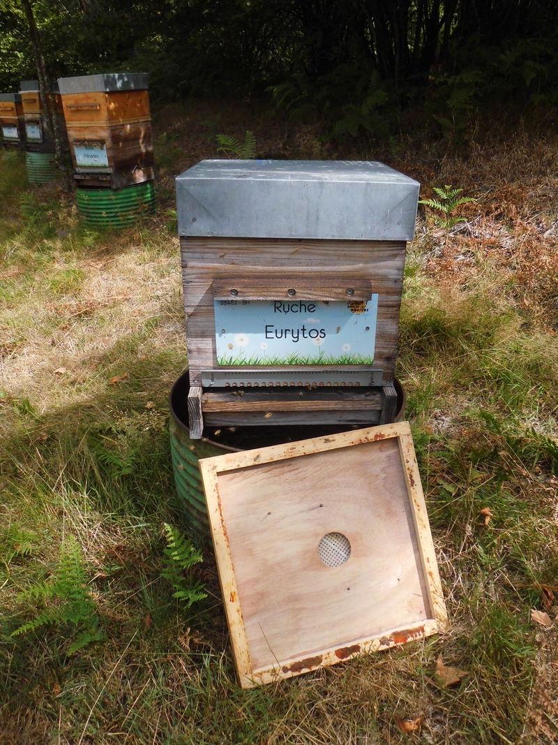 La ruche Eurytos