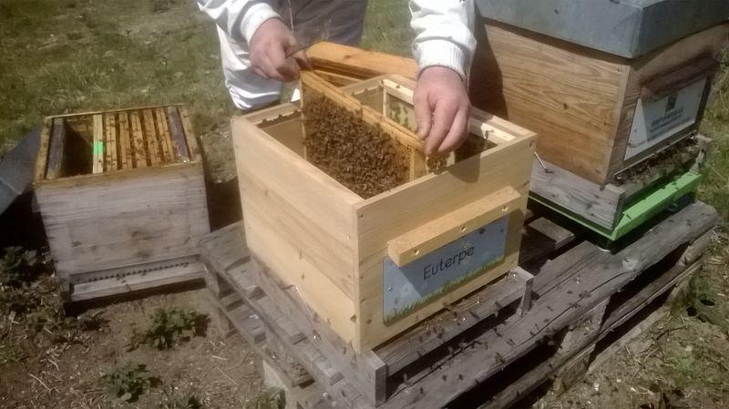 La ruche Euterpe