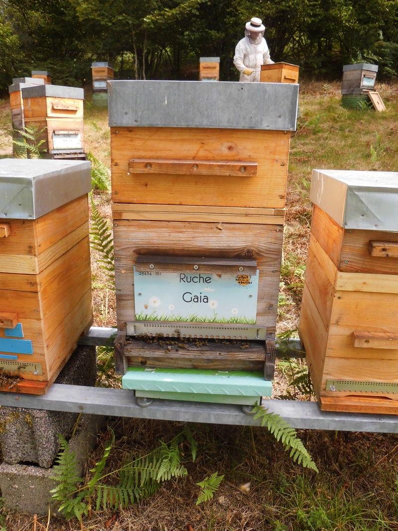 La ruche Gaia