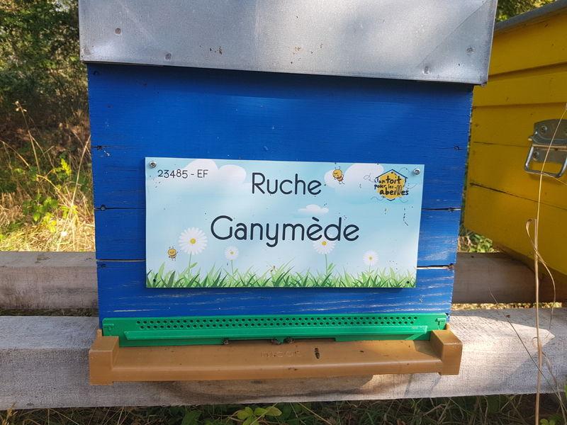 La ruche Ganymède