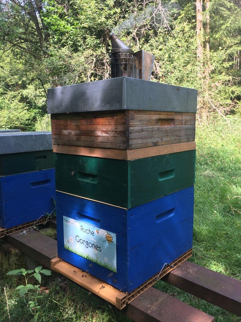 La ruche Gorgones