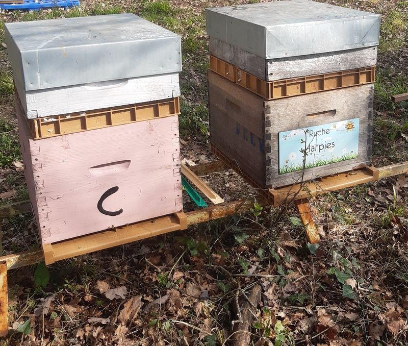 La ruche Harpies