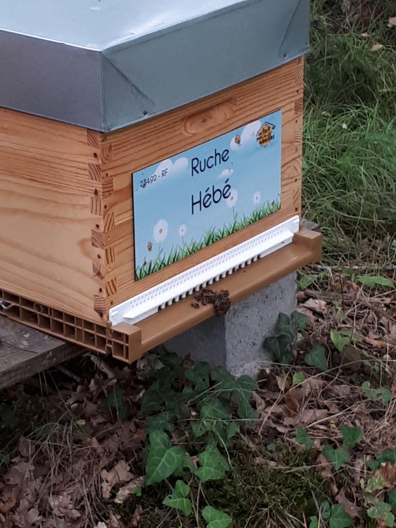 La ruche Hébé