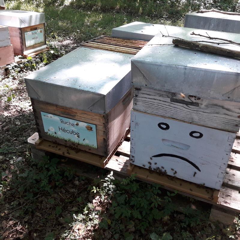 La ruche Hécube