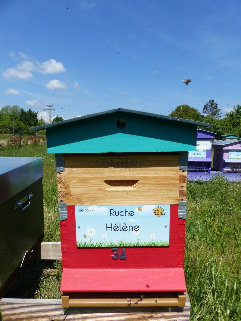 La ruche Hélène