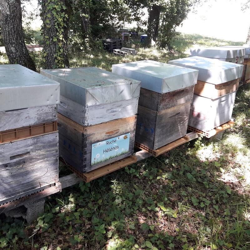 La ruche Hélénos
