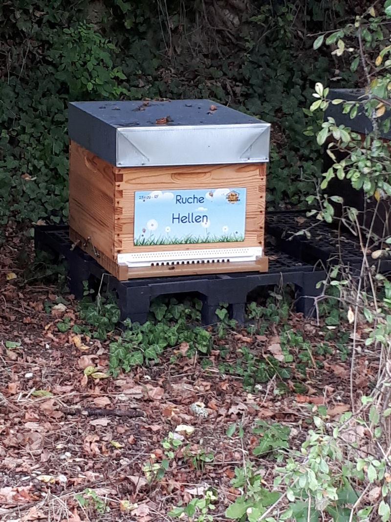 La ruche Hellen