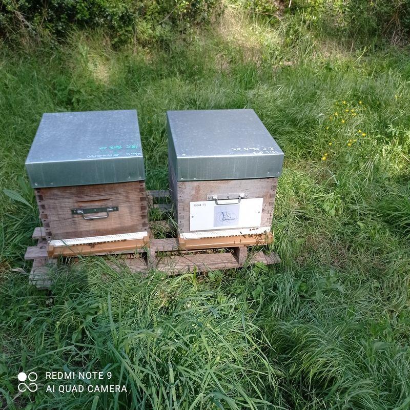 La ruche selarl orthopedie coillard