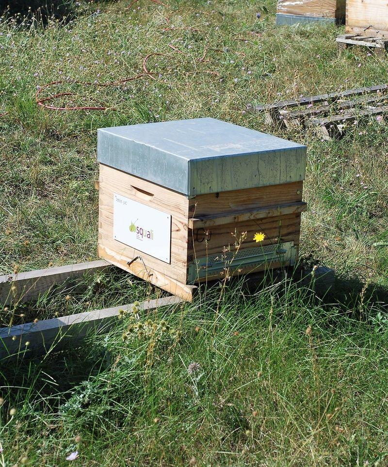 La ruche SQUALI