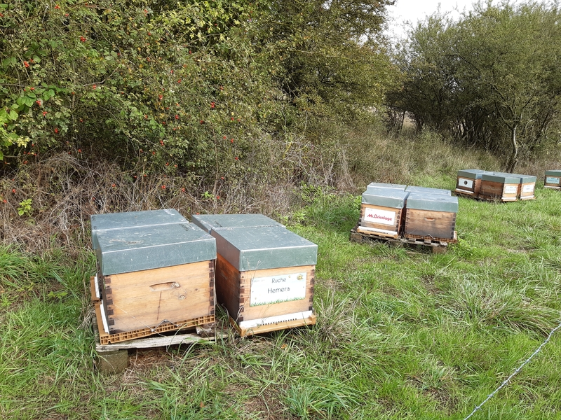 La ruche Hemera