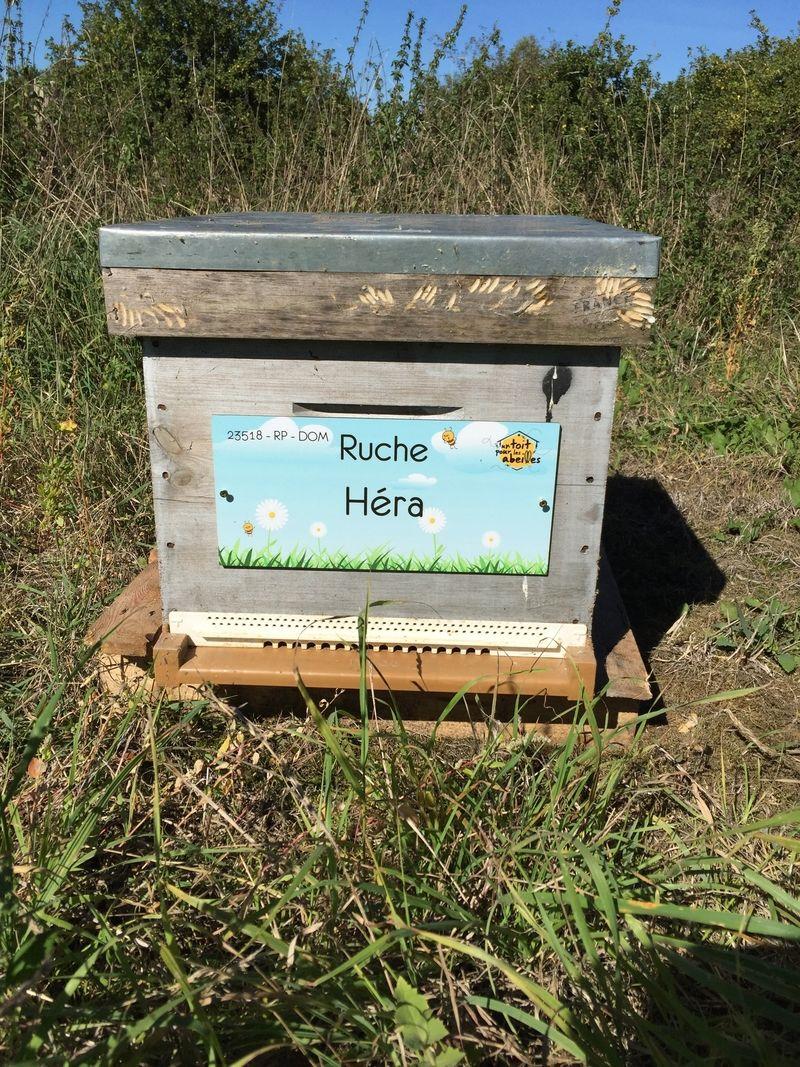 La ruche Héra