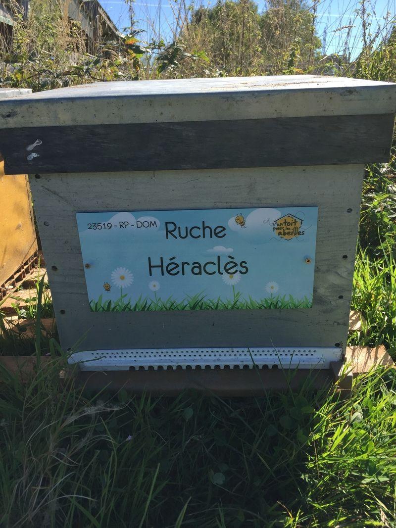La ruche Héraclès