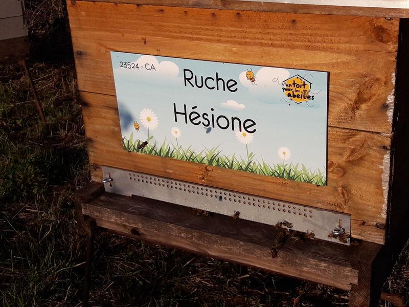 La ruche Hésione