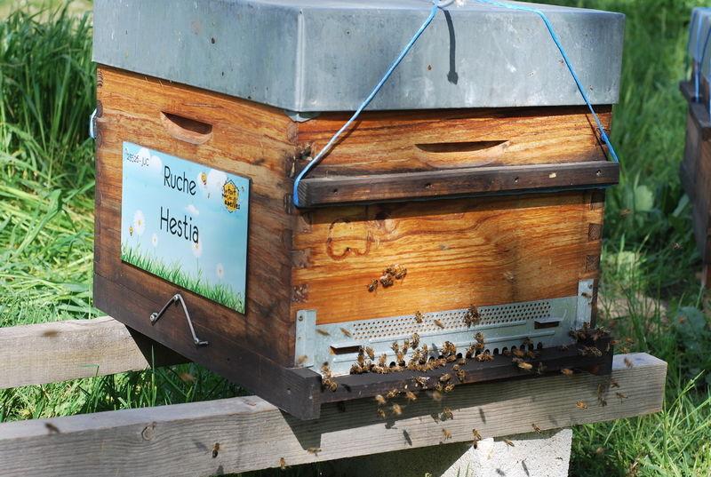 La ruche Hestia