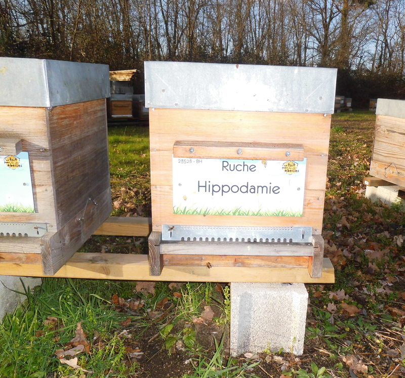 La ruche Hippodamie