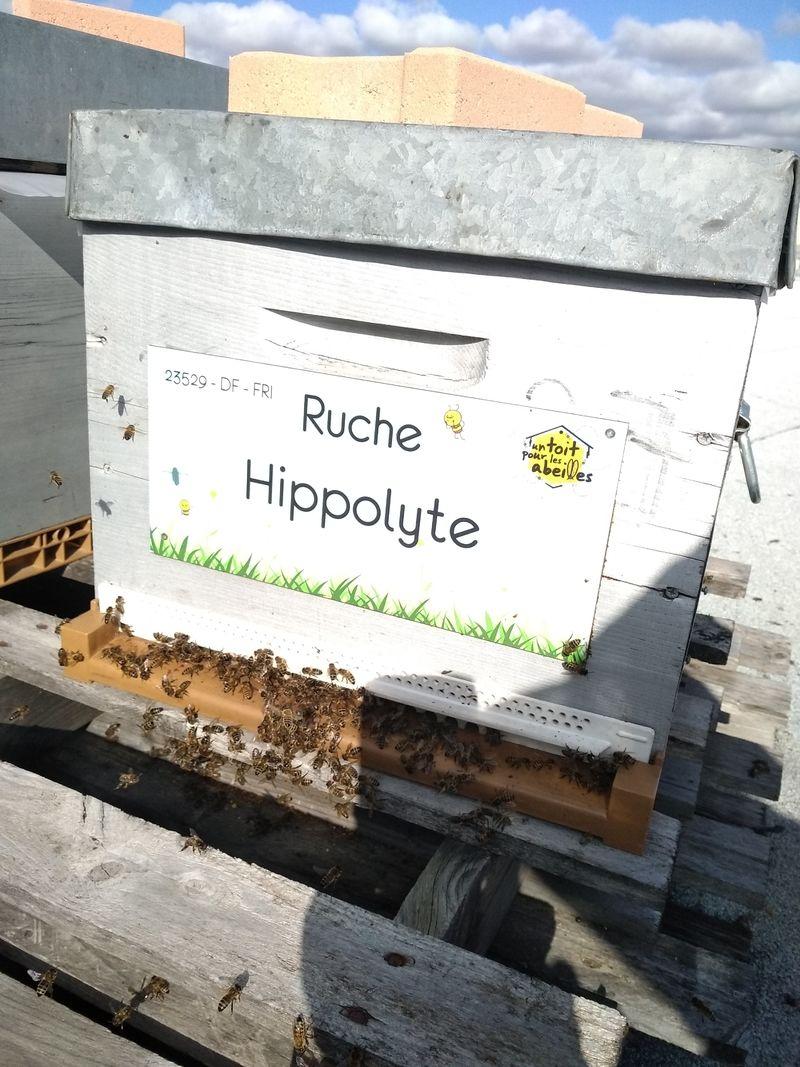La ruche Hippolyte
