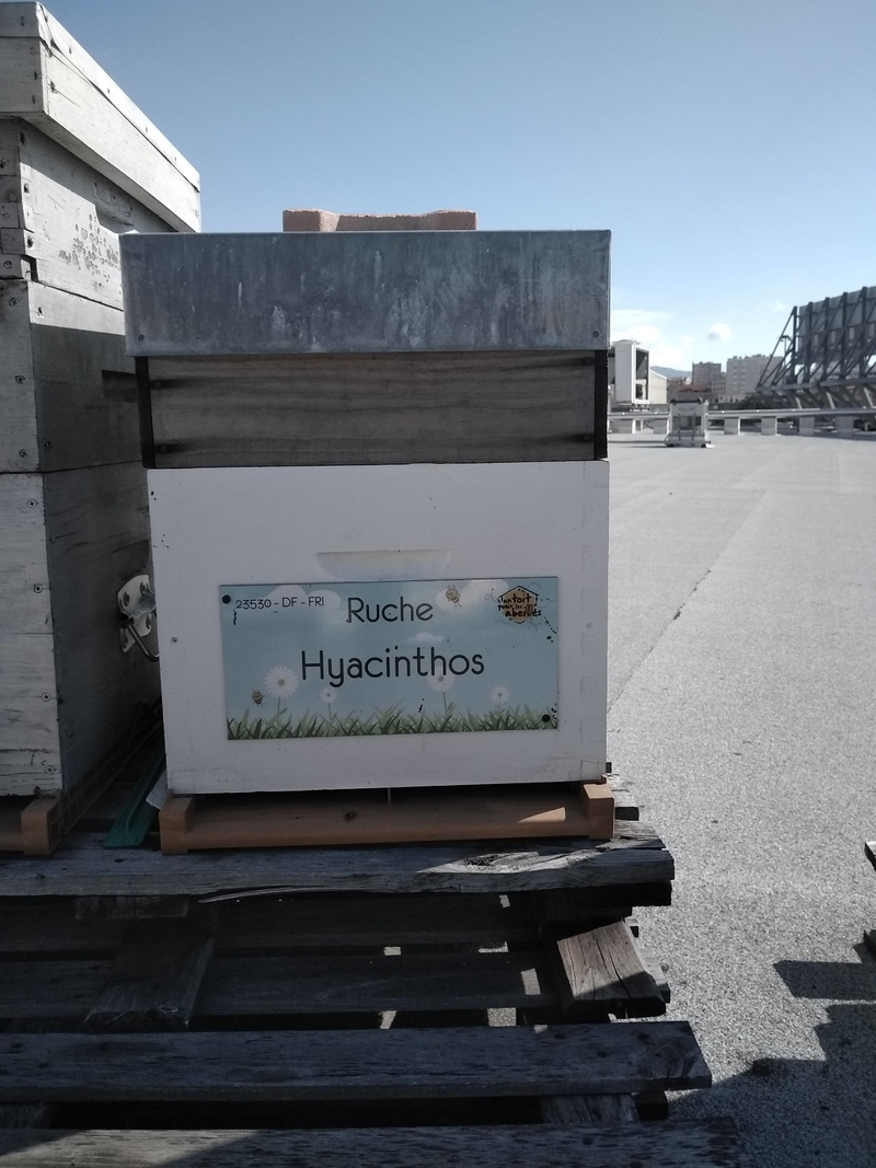 La ruche Hyacinthos