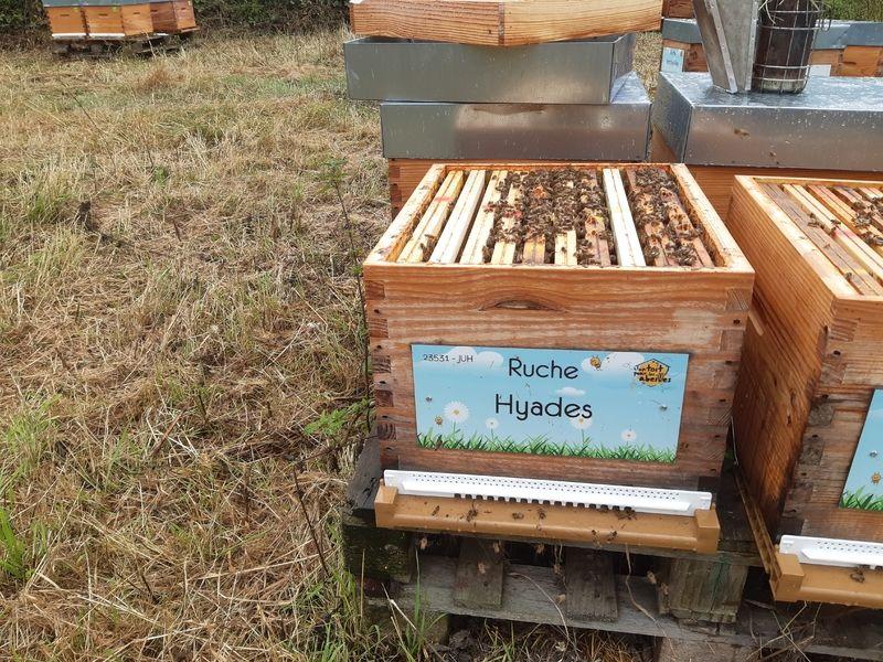 La ruche Hyades