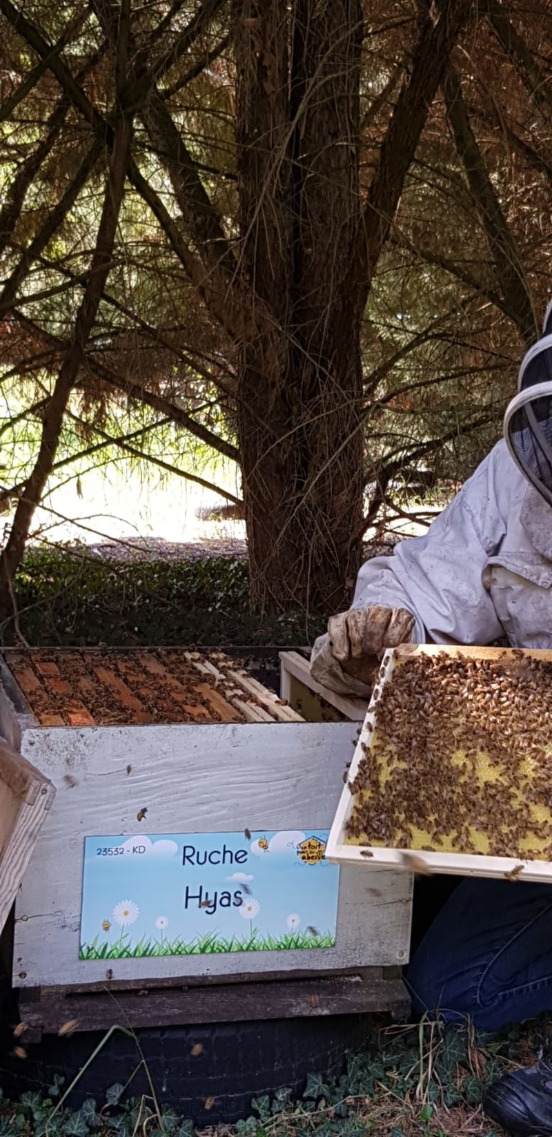 La ruche Hyas