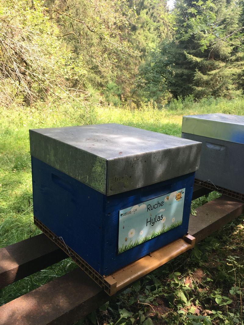 La ruche Hylas