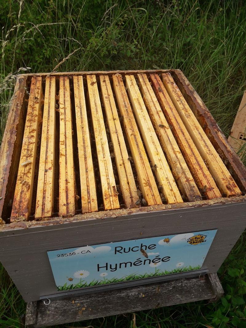 La ruche Hyménée