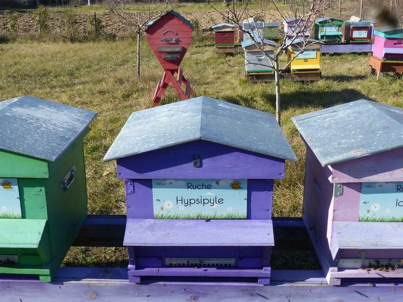 La ruche Hypsipyle