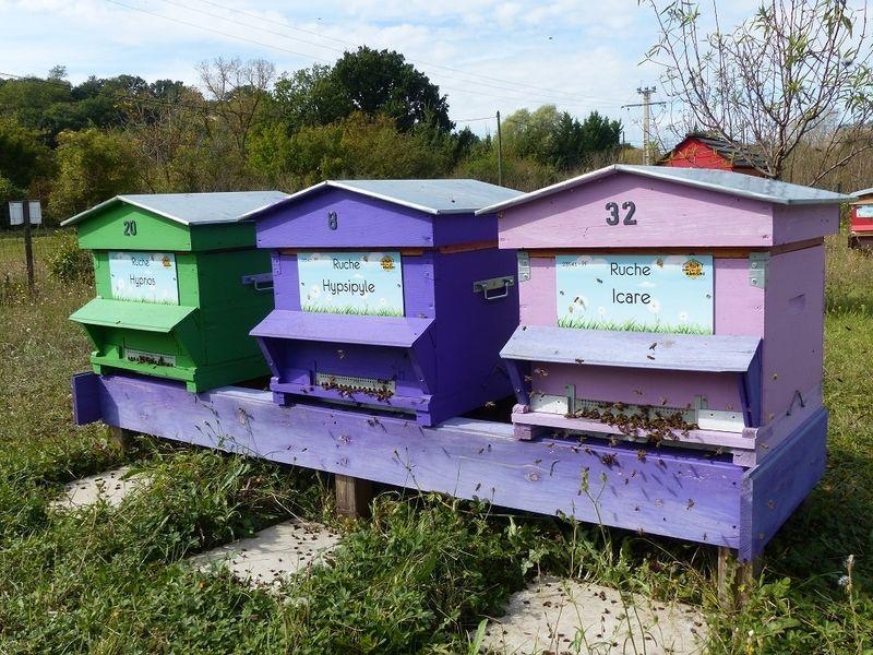 La ruche Icare