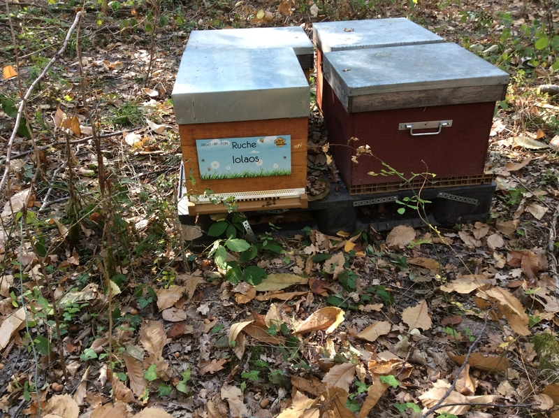 La ruche Iolaos