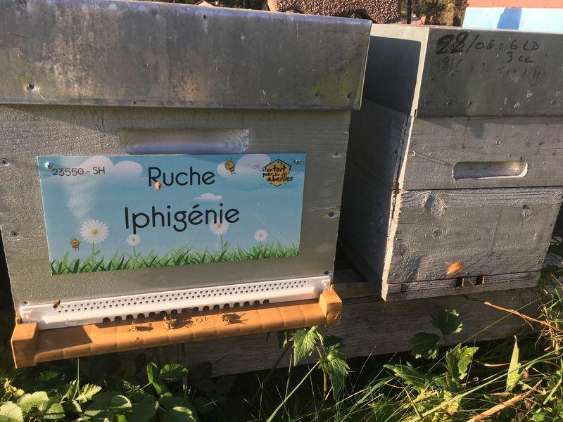La ruche Iphigénie